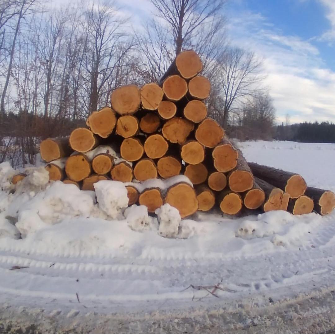 Cedar Logs For Shallop